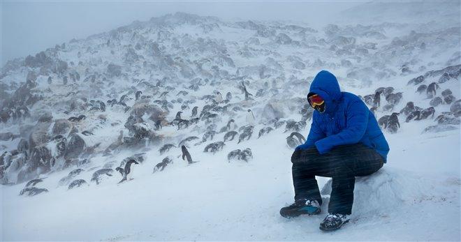 Pingouins Photo 15 - Grande