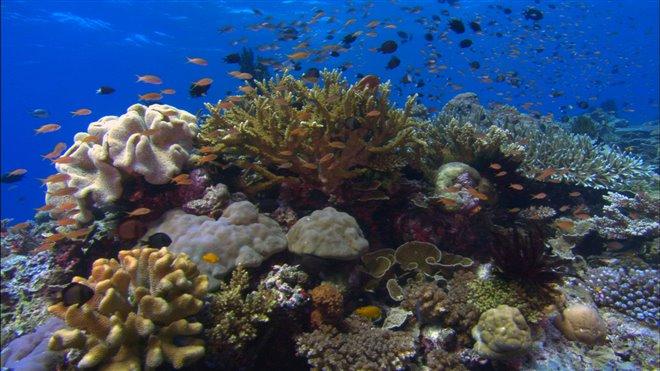 Sea of Life Photo 7 - Large