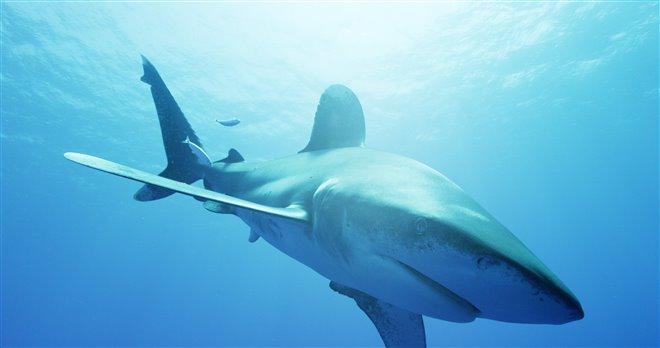 Sharkwater Extinction - Le film Photo 6 - Grande