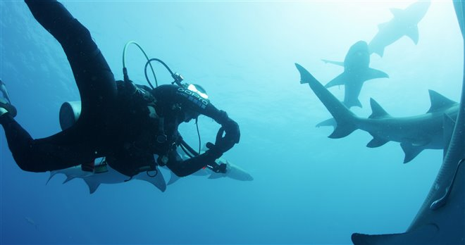 Sharkwater Extinction - Le film Photo 7 - Grande