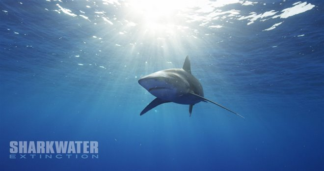 Sharkwater Extinction - Le film Photo 12 - Grande