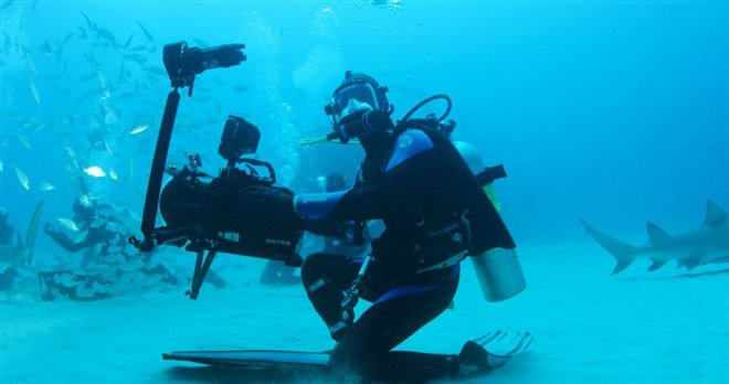Sharkwater Extinction - Le film Photo 14 - Grande
