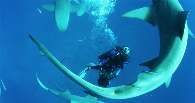 Sharkwater Extinction - Le film Photo 23 - Grande