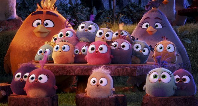 The Angry Birds Movie Photo 22 - Large