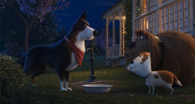 The Secret Life of Pets 2 Photo 3 - Large