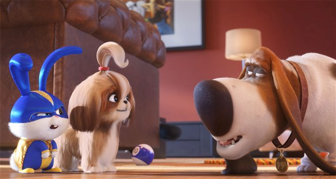 The Secret Life of Pets 2 Photo 19 - Large