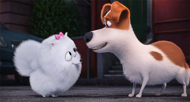 The Secret Life of Pets Photo 1 - Large