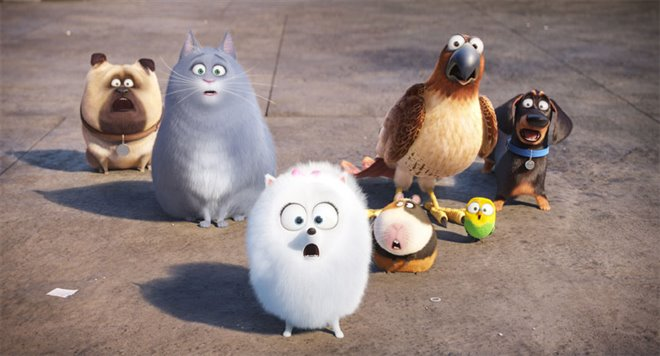 The Secret Life of Pets Photo 3 - Large