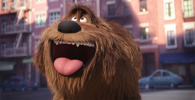 The Secret Life of Pets Photo 5 - Large