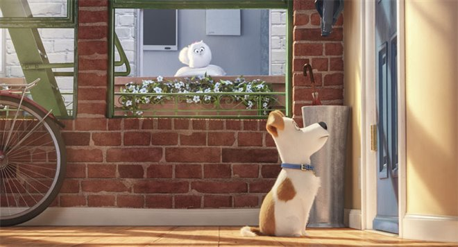 The Secret Life of Pets Photo 7 - Large