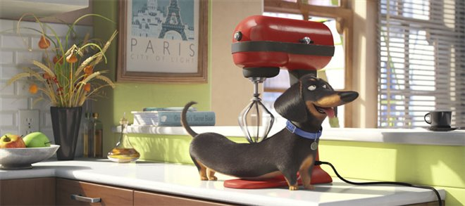 The Secret Life of Pets Photo 19 - Large