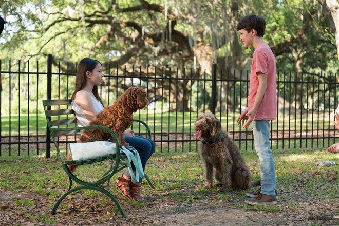 Think Like a Dog Photo 1 - Large