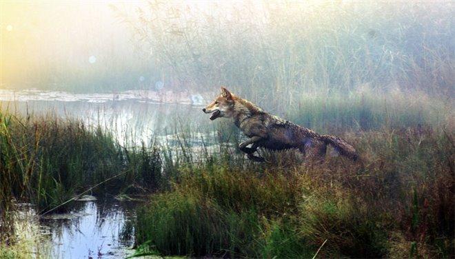 Wolf Totem Photo 1 - Large