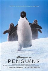 Penguins Affiche de film