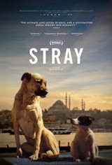 Stray (2018) Large Poster