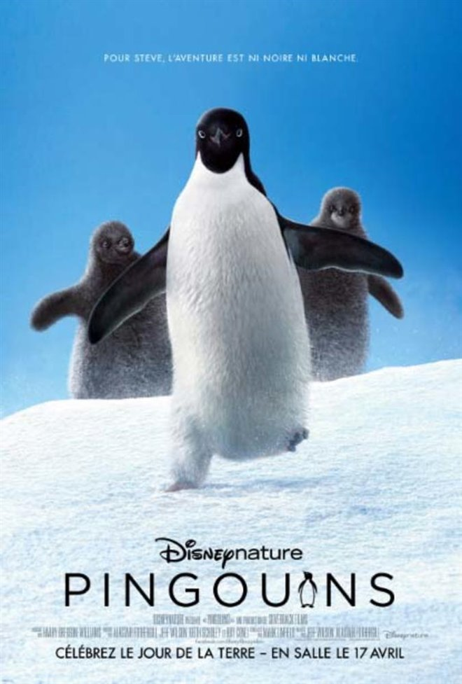 Pingouins Large Poster