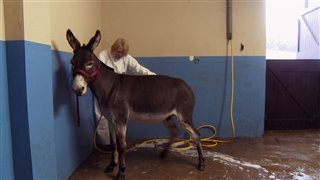 Do Donkeys Act? Thumbnail