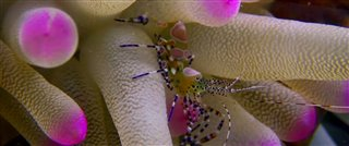 Wonders of the Sea 3D Thumbnail