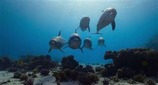 Dolphin Reef (Disney+) Movie Trailer