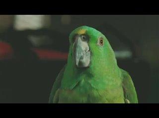 A Bird of the Air Thumbnail