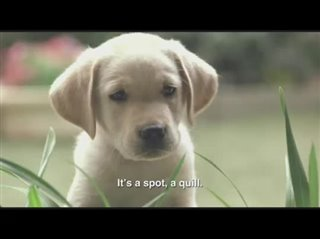 Quill: The Life of a Guide Dog Thumbnail