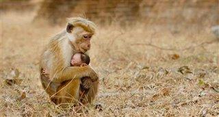 Monkey Kingdom Thumbnail