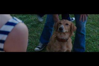 """A Dog's Purpose Movie Clip - """"Bailey Notices Smell"""" Video Thumbnail"""