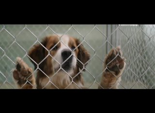 a-dogs-purpose-movie-clip---ethan-finds-bailey-at-pound Video Thumbnail