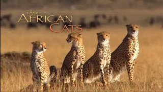 african-cats Video Thumbnail