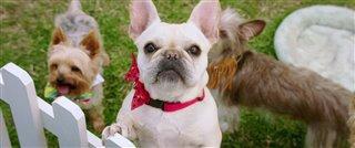dog-days-trailer Video Thumbnail
