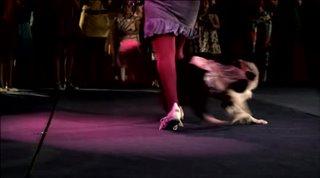 doggie-boogie Video Thumbnail