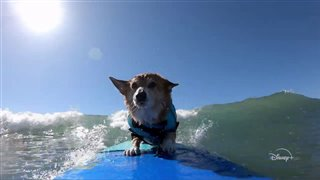 IT'S A DOG'S LIFE WITH BILL FARMER Trailer Video Thumbnail