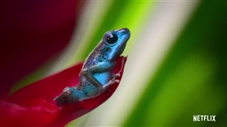 life-in-color-with-david-attenborough-trailer Video Thumbnail