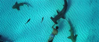 sharkwater-extinction-trailer-2 Video Thumbnail