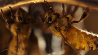 the-pollinators-trailer Video Thumbnail