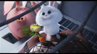 the-secret-life-of-pets-movie-clip-- Video Thumbnail