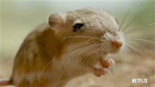 tiny-creatures-trailer Video Thumbnail